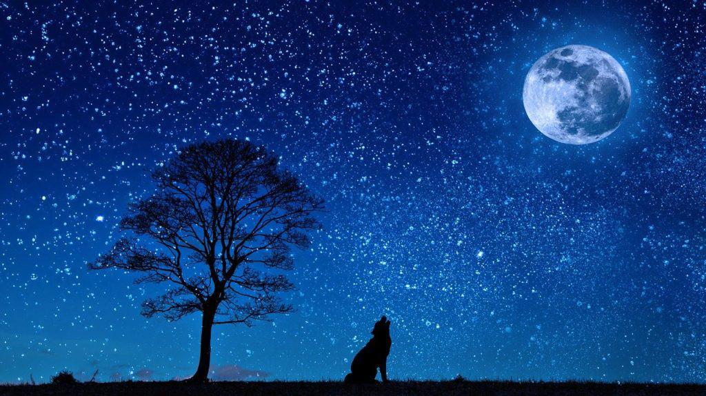 Livre-sur-la-lune