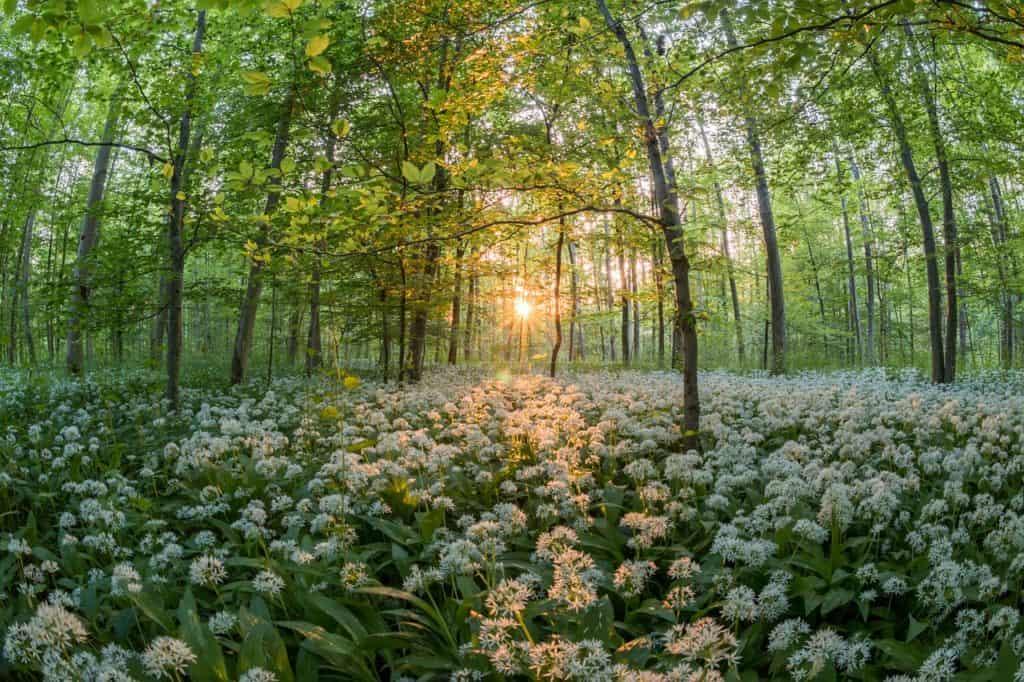 livre-naturopathie